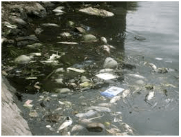 Effects of Industrial Waste on Streams