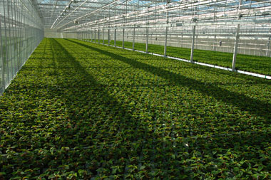 Irrigation Technology in Israel | CivilDigital |