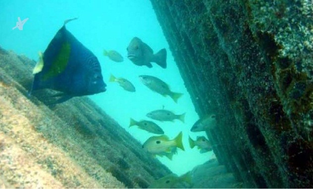 marine-life-attracted-to-artificial-reef
